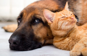 Midsomer Vets - What are the benefits of neutering your pet