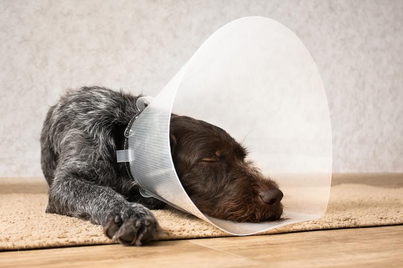 Midsomer Vets - Dog neutering