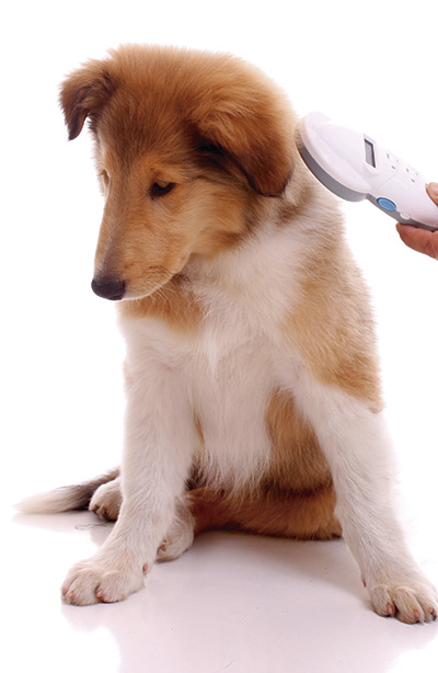 Midsomer Vets - Microchipping your dog